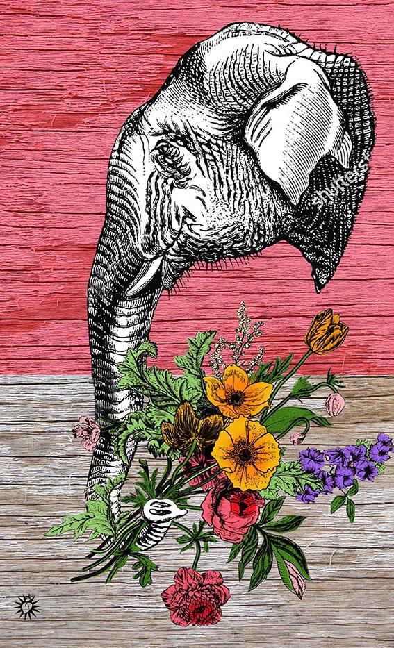 Elefante_legno_50x30