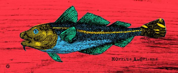Morrhua_50x20