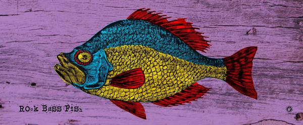 Rock bass fish_50x20