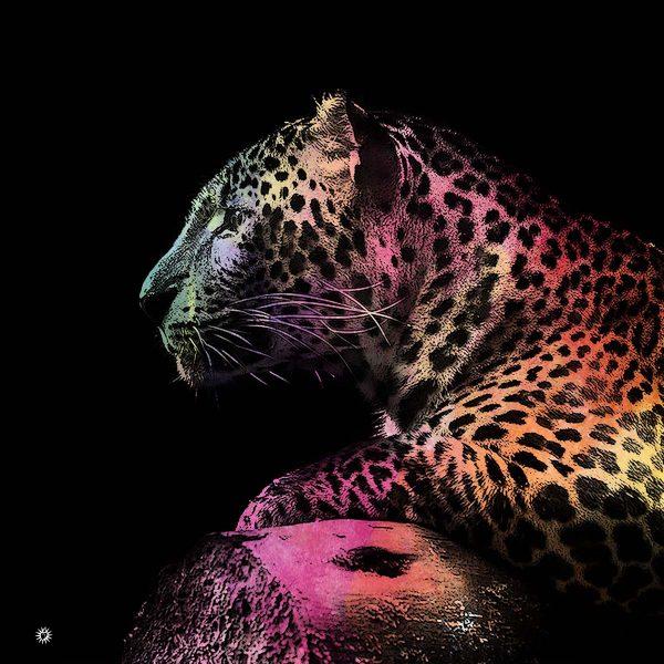 leopardoBlack