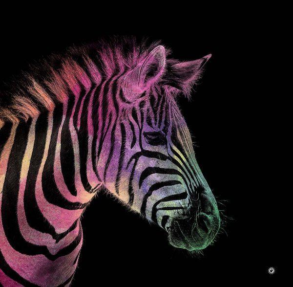 zebra_portrait